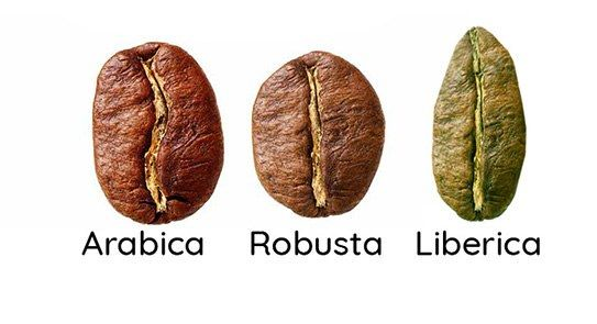 three differnce coffee beans Arabica, Liberica and Robusta